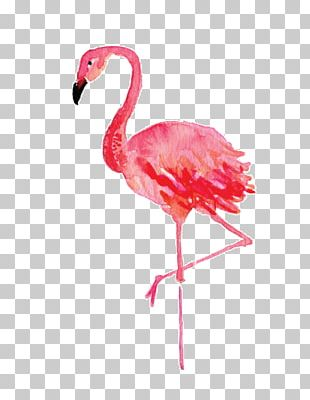 Stephenville Flamingo Watercolor Painting Drawing Canvas PNG