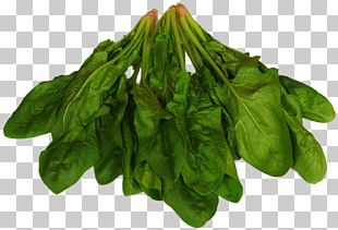 Spinach Food Chard Leaf Vegetable Eating PNG