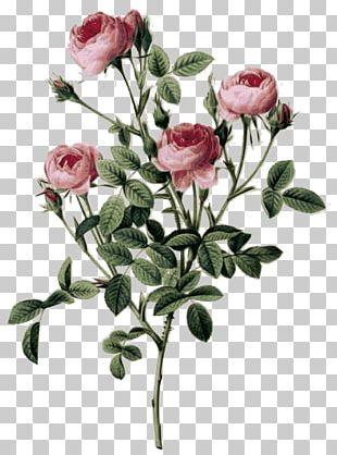 Choix Des Plus Belles Fleurs Botanical Illustration Painting Art PNG
