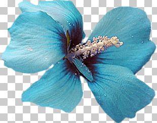 Blue Color Flower Petal Turquoise PNG