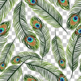 Feather Peafowl Euclidean PNG