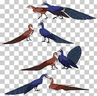 Bird Parrot Macaw Beak Feather PNG