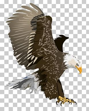 Bald Eagle Free Content PNG