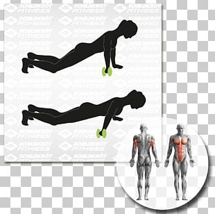 Human Body Anatomy Muscle Abdominal Exercise PNG