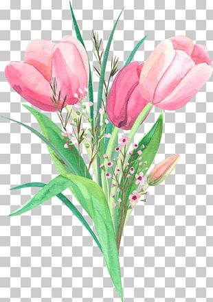 Tulips Flower PNG
