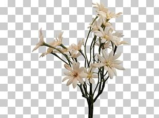 Sea Aster Cut Flowers Artificial Flower Plant Stem PNG