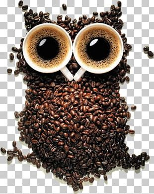 Coffee Cup Cafe Owl Coffee Bean PNG