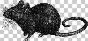 Black Rat Mouse Black Death Laboratory Rat PNG