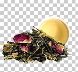 Green Tea Tea Bag Sencha Darjeeling Tea PNG