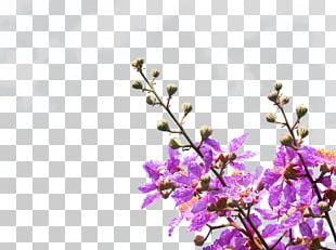 Purple Petal Violet Flower PNG