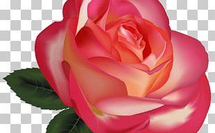 Rose Flower Desktop PNG