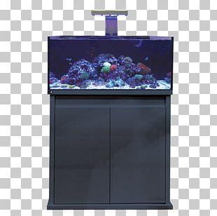 Reef Aquarium Waterworld Aquatics Marine Reef Limited Koi PNG