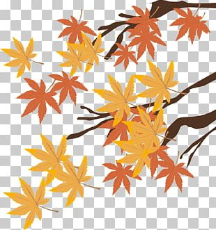 Autumn Drawing Graphic Arts Illustration PNG