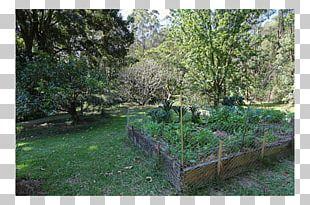 Landscaping Botanical Garden Nature Reserve Vegetation PNG
