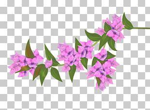 Bougainvillea Flower PNG