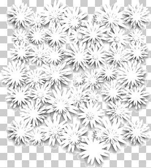Chrysanthemum PNG