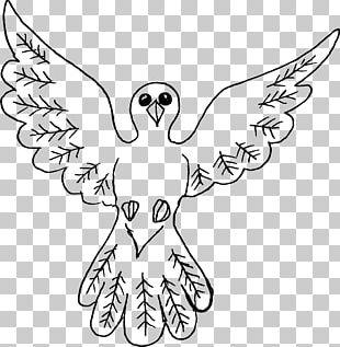 Bird Columbidae Drawing PNG