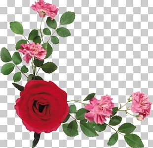 Portable Network Graphics Flower Garden Roses PNG