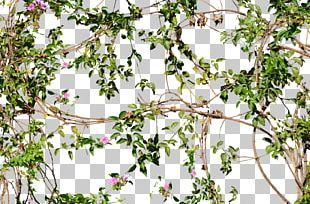 Vine Flower Tree Wall PNG