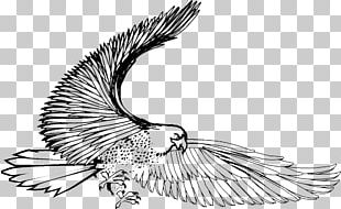Bird Eagle Black And White Hawk PNG