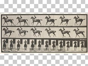 Horse Animal Locomotion Photography Photographer Art PNG