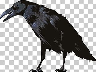 American Crow Computer Icons Graphics Software PNG