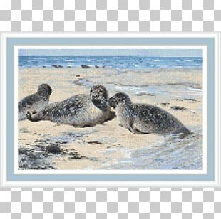 Harbor Seal Sea Lion Company Seal Lithography Germany PNG