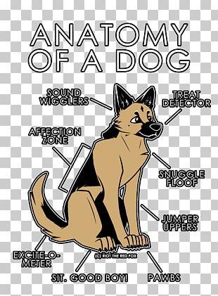 Cat Dog Anatomy Fox PNG