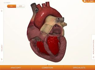 Heart Cardiovascular Disease Human Body Anatomy Muscle PNG