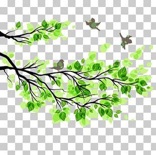 Branch Leaf Tree Illustration PNG