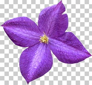 Violet Petal Purple Leather Flower PNG