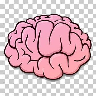 Brain Rules Human Brain Brain–computer Interface Brain Injury PNG