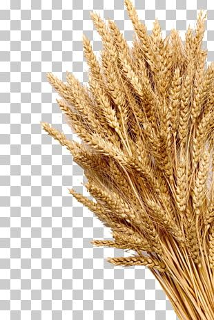 Wheat Ear Cereal Whole Grain Stock Photography PNG