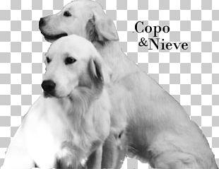 Golden Retriever Labrador Retriever Akbash Dog Puppy Dog Breed PNG