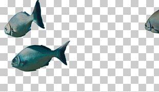Marine Biology Marine Mammal Plastic PNG