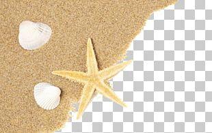 Shell Beach Seashell Sand PNG