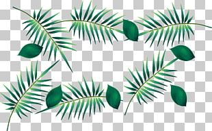 Green Leaf Watercolor Painting PNG