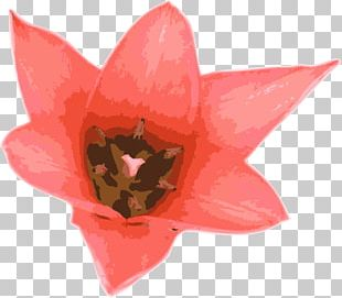 Flower Tulip PNG