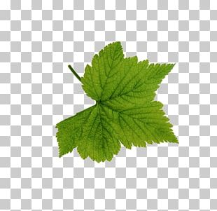 Look At Leaves Leaf Green PNG