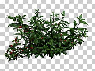 Shrub Garden Pixel PNG