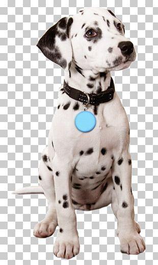Golden Retriever French Bulldog Dalmatian Dog Puppy Valentine's Day PNG