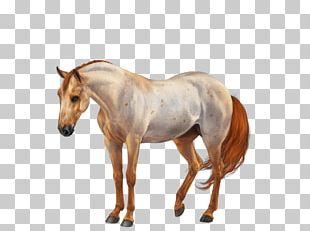 American Quarter Horse American Paint Horse Mane Stallion Mare PNG