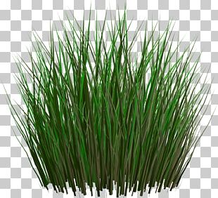 Resolution Grasses PNG