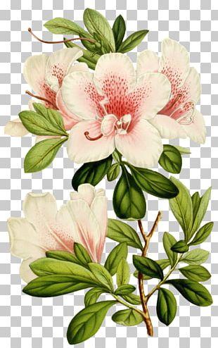 Cut Flowers Botany Garden Plant PNG
