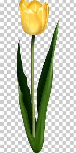 Tulip Petal Leaf Flower PNG