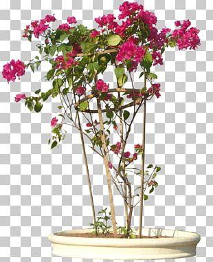 Flowering Plant Bougainvillea Glabra Shrub Flowering Plant PNG