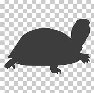 Tortoise Sea Turtle Silhouette Reptile PNG