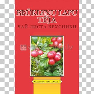 Herb Tea Leaf Root Medicinal Plants PNG