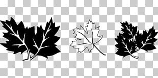Maple Leaf Drawing Black And White PNG