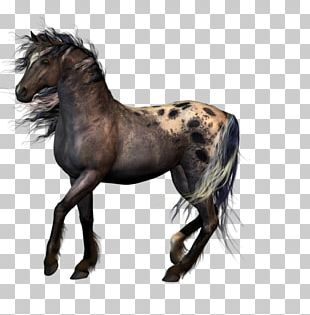 Appaloosa Animal PNG